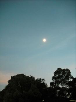 07.19 この日の月.jpg