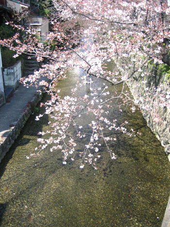 03.31川面の桜.jpg