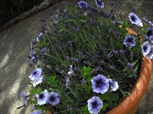 05.14 花の道4.jpg