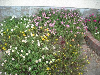 09.03夏の花.jpg