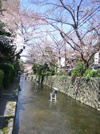 3.31お店の前の川.jpg