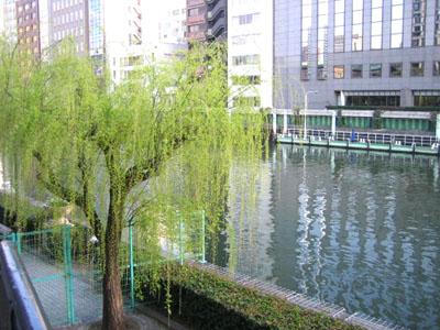 川辺のヤナギ.jpg