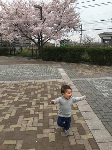 2017 春 あらたくん.jpg